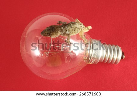 One Small Gecko Lizard and Light Bulb on a Colred Background - stock photo