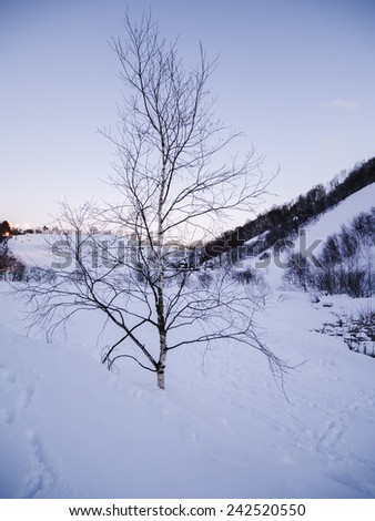 One small tree in the evening sun on the hill. - stock photo