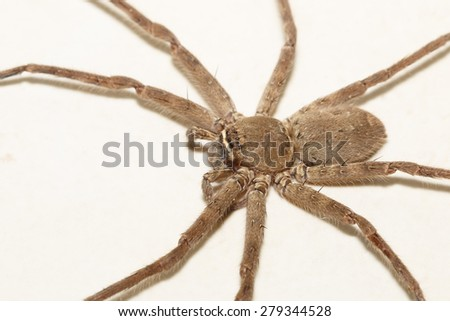 One spider isolated on white background. - stock photo