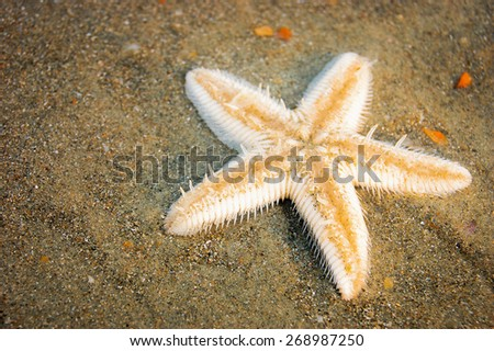 One starfish on wet sand of a tropical sea beach - stock photo