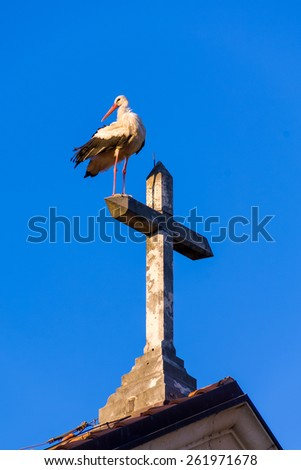 One stork at the top of the church and the white cross - stock photo