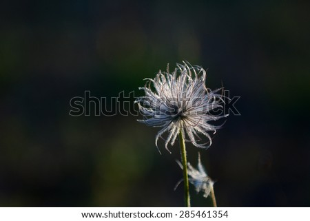 one Summer wildflowers  moving in the wind - stock photo