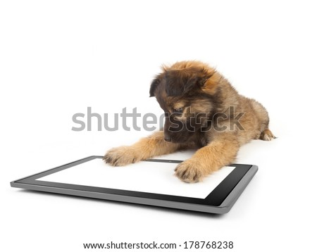 one tablet on the white backgrounds and dog on the talet like ipades - stock photo