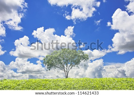 One tree and green grass background