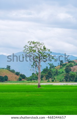 One tree and perfect grass field. On a background - mountains.