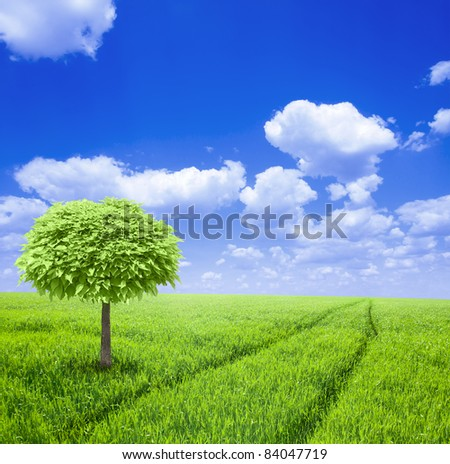 One tree at green field under blue sky