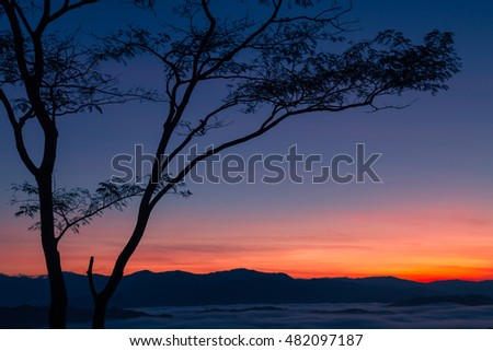 One tree growing at beautiful sunrise