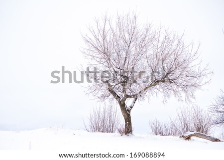 One tree highly contrasted against a white winter background
