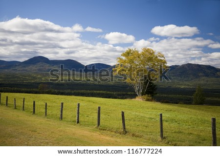 One tree in a green field with a fence on a sunny day - stock photo