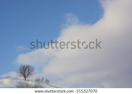 One tree on snow hill and blue sky with white cloud background in winter Ukraine