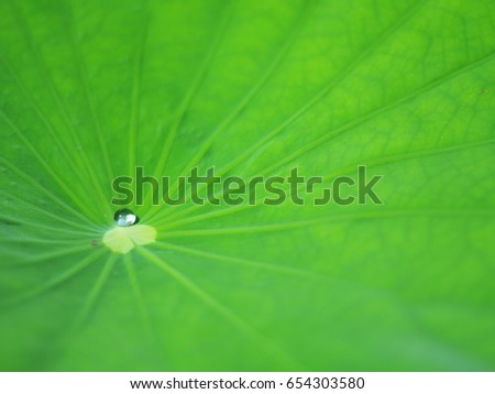 one water droplet rolling on the lotus leaf, Rolling on the BOA