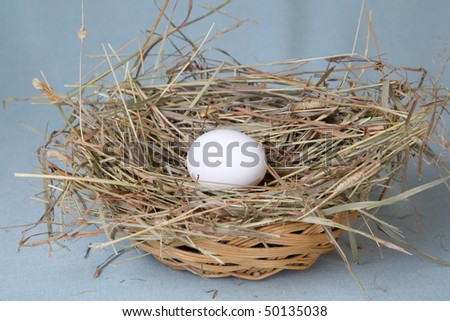 one white egg lies in nest