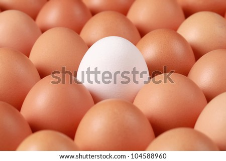 One white egg surrounded by brown eggs in a box. The focus is on the white egg. - stock photo