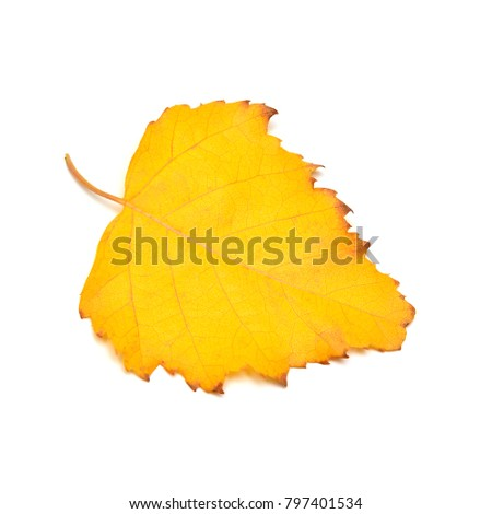 One yellow autumn birch leaf isolated on white background. Flat lay, top view