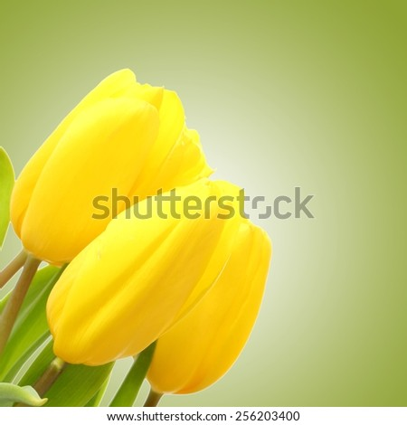 One yellow tulip on a bright green background - stock photo