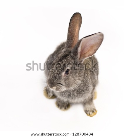 Brown rabbit Stock Photos, Images, & Pictures | Shutterstock