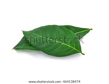 ongan leaves isolated on white background.