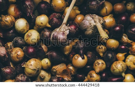 Onion from village garden as a background - stock photo