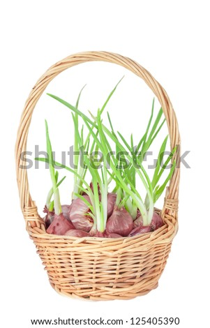 Onion in a basket - stock photo