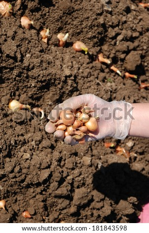 Onion seed on natural background