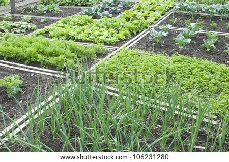 Onions and different other vegetables in a vegetable garden - stock photo