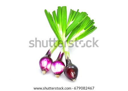 Onions and onions leaves on white background