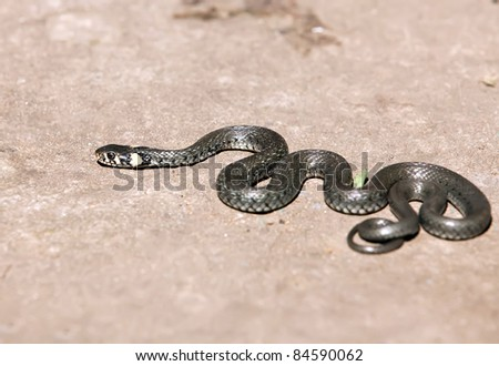 only snake in park outdoor - stock photo