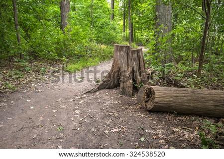 Ontario's Scenic Bruce Trail - stock photo