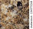 onyx marble granite texture background - stock photo