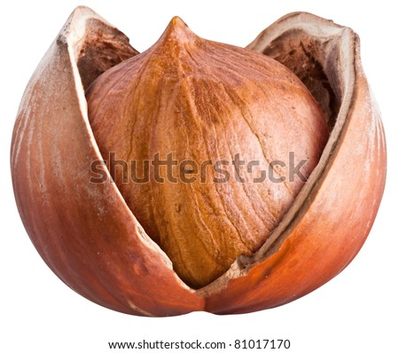 Open filbert nut isolated on a white background. - stock photo