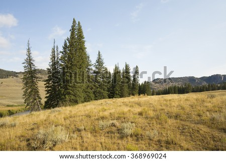 Open forest and sagebrush scrub land, with small grove of pine trees on mountain ridges in Yellowstone National Park, Wyoming.
