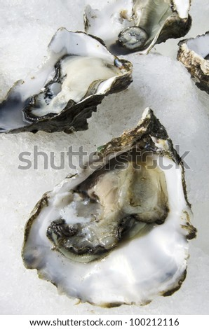 Open fresh oysters on ice in a seafood market.