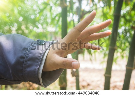 Open hand with palm up on tree background.success donation hungry plant  concept .design nature color leaf bamboo show blurred connection.growth garden forest beautiful space.human care help offer. - stock photo