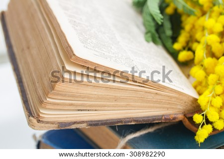open vintage old book  with mimosa flowers close up  - stock photo