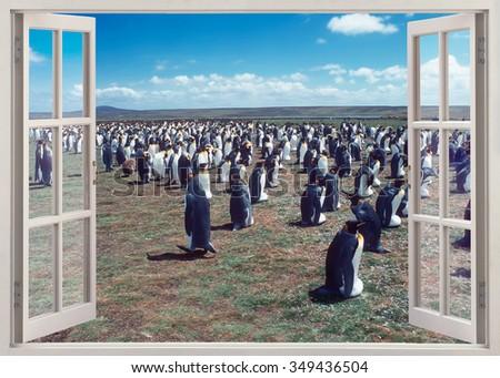 Open window view to colony penguins - stock photo