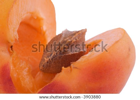 opened apricot with stone inside