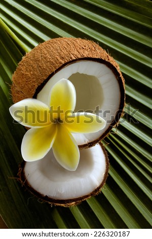 coconut flower stock images royaltyfree images amp vectors
