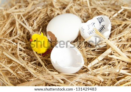 Opened eggshell and with the marked days