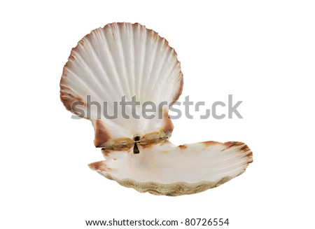Opened empty scallop shell isolated on white background - stock photo