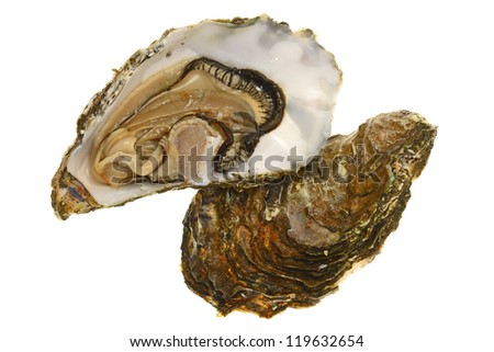 Opened Fresh Oyster Shell Showing The Meat - stock photo