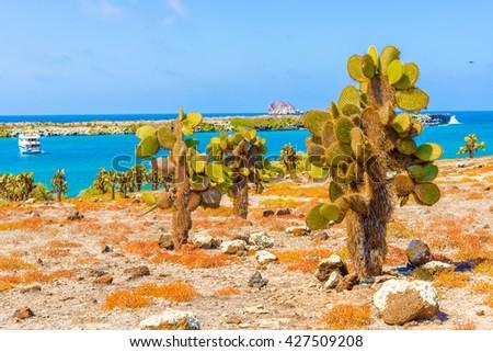 Opuntia cactus forest and ocean at Galapagos island of Santa Cruz. - stock photo
