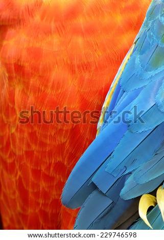 Blue and orange bird logo - photo#12