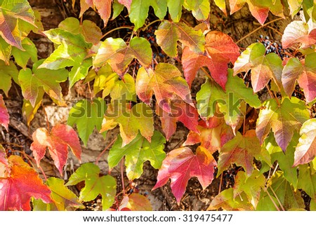 orange and green leaves on a old stone wall