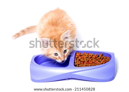 Orange and white striped kitten drinking water  out of dish. - stock photo