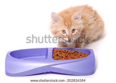 Orange and white striped kitten eating food morsels out of dish.
