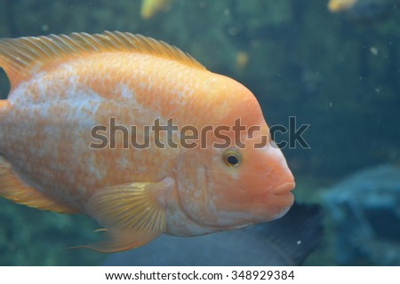 Orange and White Tropical Fish