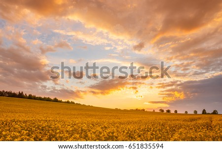 Orange and yellow sunset - colorful sky, clouds, flowering colza (coleseed) field.