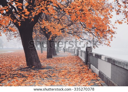 Orange autumn trees in the fog, old town and a woman walking a dog - stock photo
