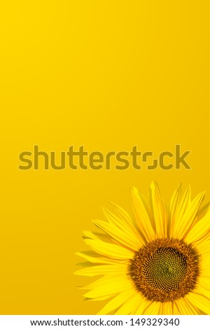 orange background and a sunflower - stock photo