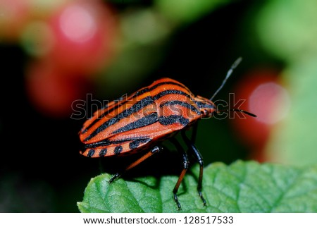 orange black striped beetle sitting on a leaf in the sun